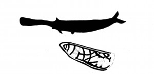 paddle fish scan