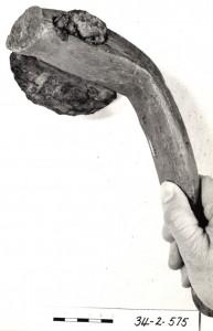 Beaver pond axe 3