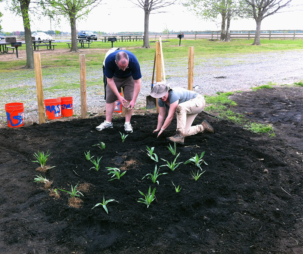 Dr. Horton (kneeling) and Arkansas Master Naturalist volunteers transplanting rattlesnake master (Eryngium yuccifolium) into the Plum Bayou Garden, Spring 2015 (Photo by Patrick Solomon, Arkansas Master Naturalists)