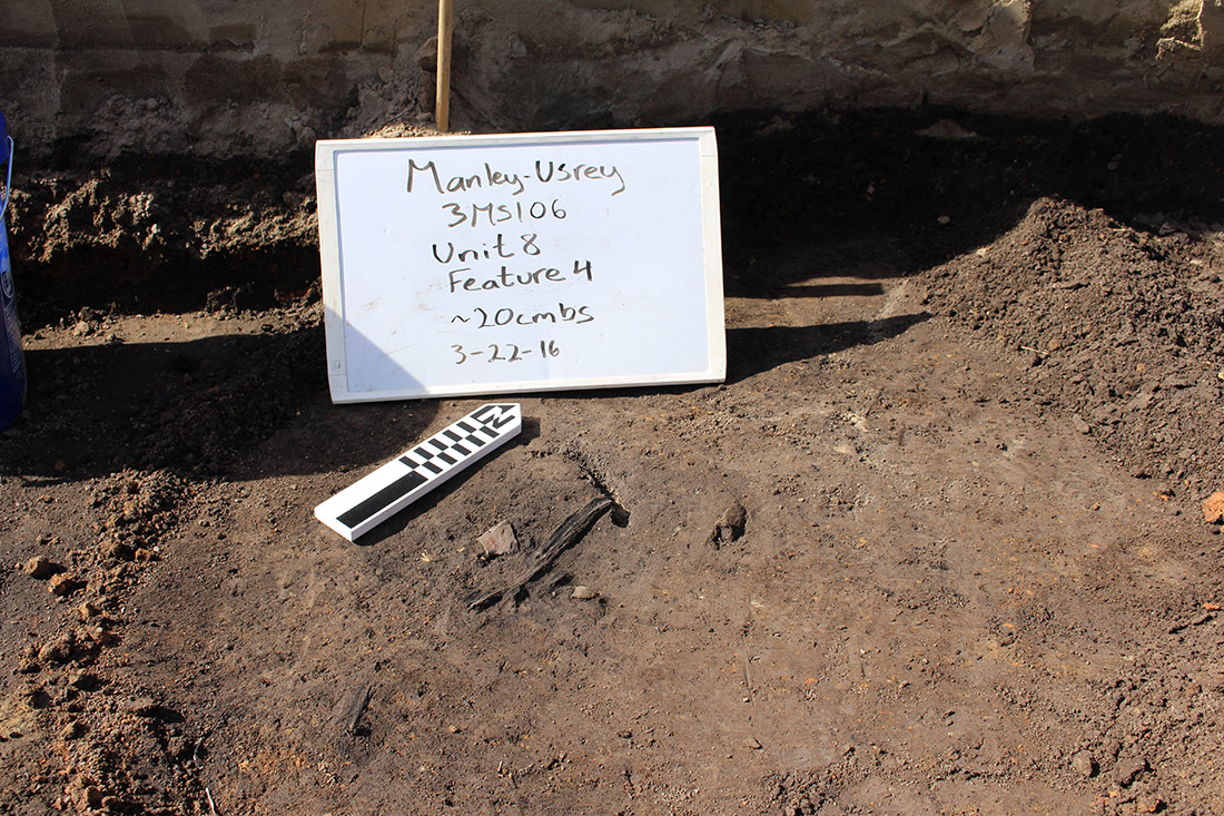 Figure 2: Carbon sample of cane found underneath daub fall on the south edge of Unit 8.