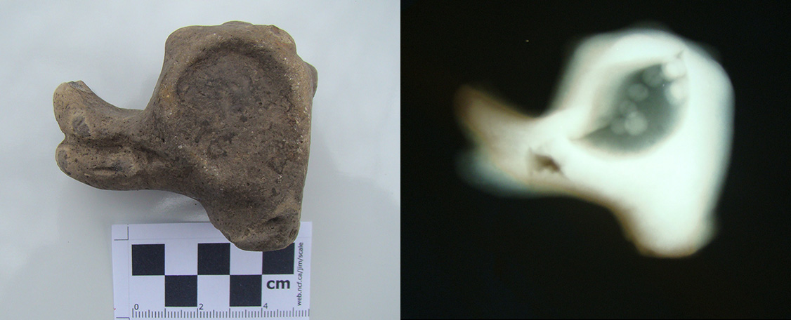 Photograph and x-ray image made in 2012 of ceramic animal effigy from the Knappenberger site.