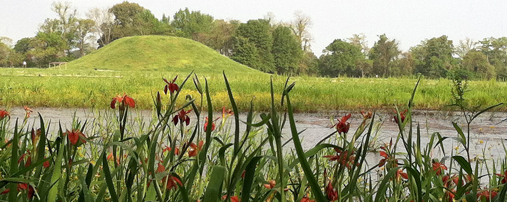 Swamp Iris blooming at Toltec Mounds Archeological State Park & Research Station