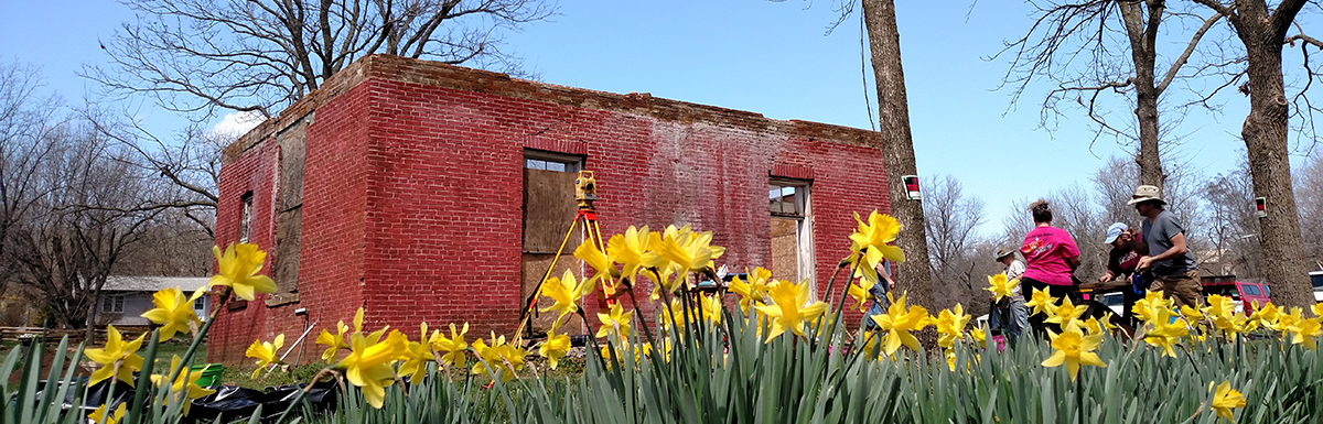 Daffodils blooming at the Methodist Manse in Cane Hill during the 2015 Spring Break Dig.
