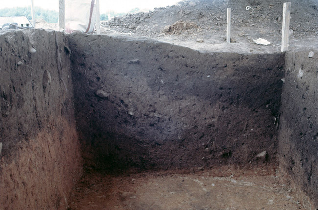Feature 2 Unit 10:10 West Wall Pit Profile.