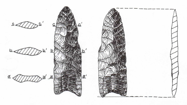 Figure 1. Fluted point (ARAS-1), actual size, from Arkansas Paleoindian Database, typed as a Sedgwick point in Morse and Morse (1983).