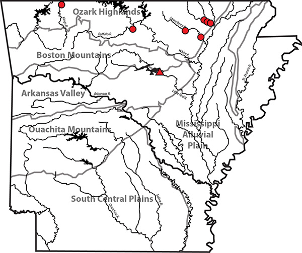 Figure 3. Location of the Heber Springs site (red triangle) and streams where living specimens of Epioblasma triquetra have been documented by modern surveys of freshwater mussels (red circles).
